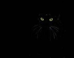 At night.......... (KlavsNielsen) Tags: cat night eyes black