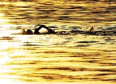 Da 271 . Tres Pruebas I (WakamouL) Tags: water silhouette sunrise wow mexico agua amanecer silueta nadando gp swiming valledebravo triatlon ltytrx5 ltytr1