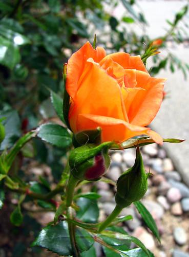 Orange Bloom from Notsocrafty.com