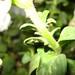 Using Canon Digital IXUS 60 (Powershot SD600)