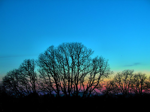 Oak Trees By (Nearly) Night