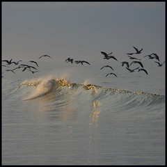 Gold (tanera) Tags: blue beach water birds animals reflections shots flock spray reflective algarve anywhere outstanding silverlining outstandingshots abigfave superaplus aplusphoto wwwtaneracouk httptaneracouk