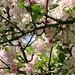 Spring Blossum - 3