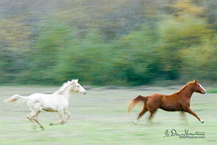 Today is the first day of the rest of your life (wildphotons) Tags: horses shield soe excellence naturesfinest blueribbonwinner supershot flickrsbest of anawesomeshot