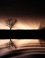 Storm in Sepia (Craig Shillington) Tags: storm reflection tree water 1 interestingness interesting mod bravo ripple explore lonely lightning lonelytree topten magicdonkey 5000v outstandingshots 175f craigshillington abigfave superbmasterpiece diamondclassphotographer flickrdiamond world100f