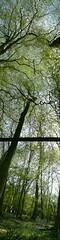 top to bottom (matthewvenn) Tags: wood escher panorama