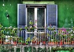 balcone a primavera (Giusy Iescone (cantoliberox)) Tags: flowers verde green window napoli fiori thewall hdr balcone pianura ilmuro 10faves kodakz650 cmeradeourobrasil superaplus aplusphoto favoritegarden
