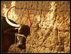 buffalo 1 (Sukanto Debnath) Tags: india animal buffalo village horns hyderabad andhrapradesh debnath sukanto