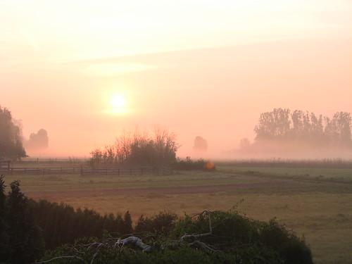 Sonne im Morgennebel