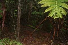 IMG_4337 (beisenbe) Tags: hawaii manoa trowbridge december2006