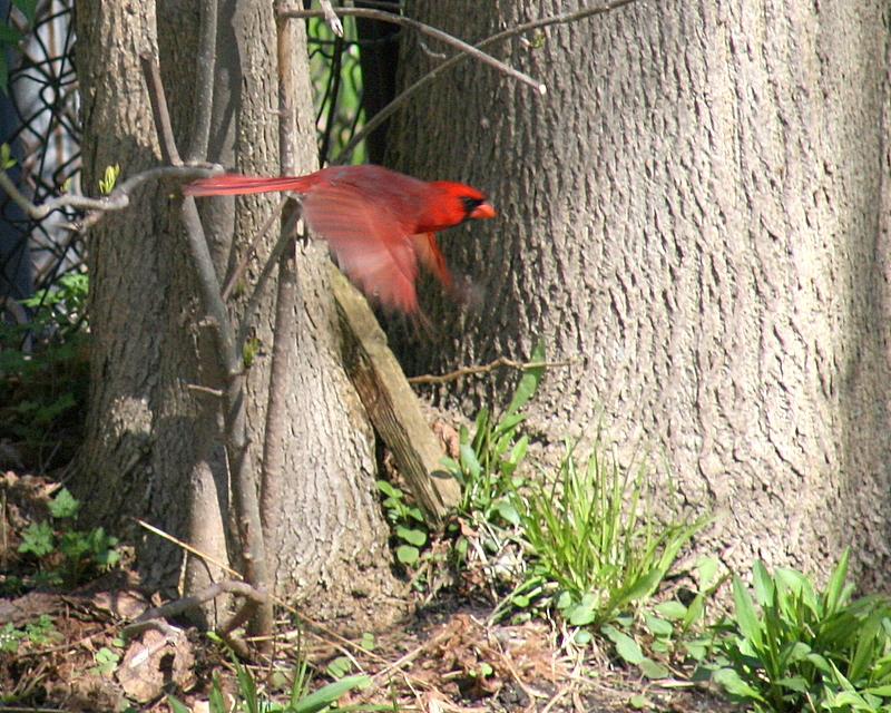 gotta go ... red bird gets the worm