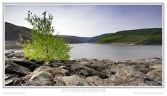 Llyn Brianne Reservoir (Sean Bolton (no longer active)) Tags: lake tree water rock wales carmarthenshire dam cymru reservoir loch wfc llynbrianne seanbolton welshflickrcymru ffotocymrucouk ffotocymru