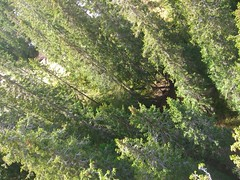 From above (Clinou) Tags: trees norway pine forest norge pin arbres trondheim fort 2007 norvge