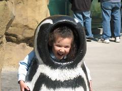 penguin amelia