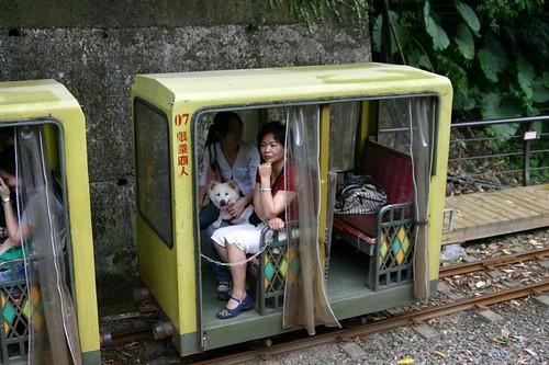 狗子坐列車