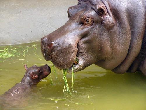 mama eet