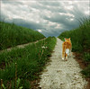 Great Expectations (Mr.Bones) Tags: grass clouds cat topf50 path journey artlibre 123f50 superaplus aplusphoto