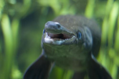 Wilhelma Aquarium
