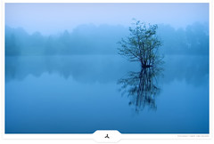 A New Day (Gert van Duinen) Tags: blue mist reflection tree fog dawn still bravo scenery moody digitalart earlymorning scenic peaceful simplicity lonely minimalism landschaft motionless atmospheric lonelytree landschap simplified coolmist dutchartist flickrsbest impressionsexpressions abigfave superaplus aplusphoto landschaftsaufnahme superbmasterpiece beyondexcellence diamondclassphotographer flickrdiamond cresk tribehorizon impassivity favescontestwinner alemdagqualityonlyclub magicdonkeysbest gertvanduinen worldclassnaturephoto thenewselectbest flickrenvythebesttm