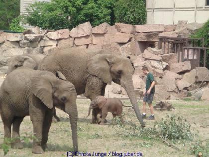 Elefantenbaby im Tierpark Berlin