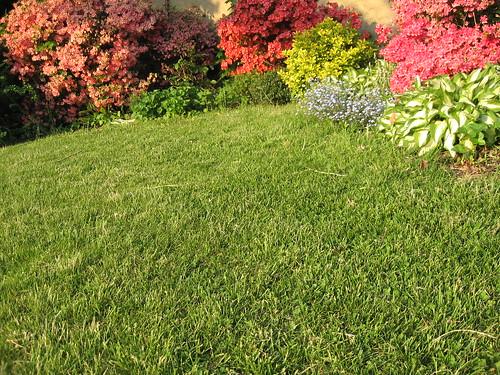 Lawn with Azaleas