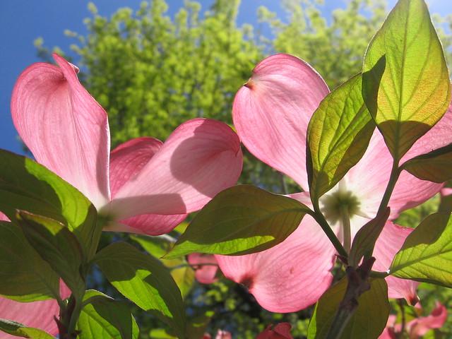 pink_tree_2