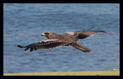 Gliding on air