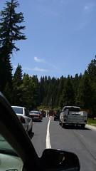 P1020537 (vishu_itbhu) Tags: california yosemitenationalpark vishu