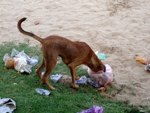 Dog finishing the garbage on the beach