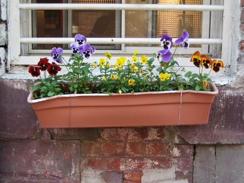 Dumbo Flowers