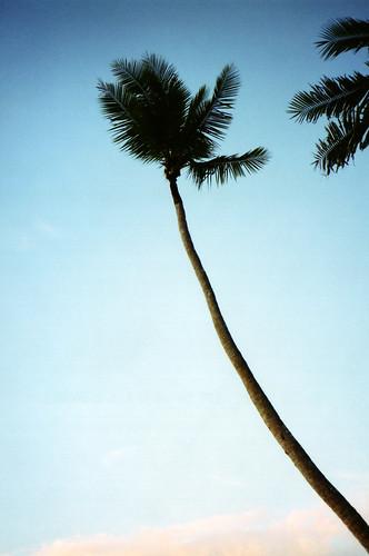 Paddock Café :: 椰子の木と青い空と