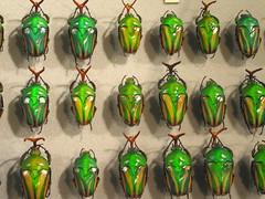 Carnegie Museum beetles
