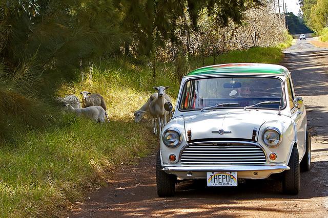 austin hawaii 1974 mini pickuptruck goats waimea bigisland morris kamuela bonafide minipup