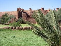 IMG_3743 (oledoe) Tags: morocco palmtree ksar kasbah aitbenhaddou   0tagged set:name=200704morocco set:name=200704aitbenhaddou