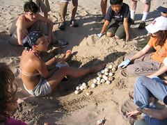 excavatingoldnest.jpg