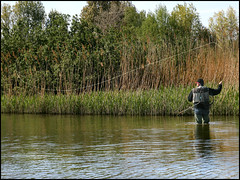 SPRING CAST (ESOX LUCIUS) Tags: fish holland fishing taco flyfishing bream haringvliet freshwater cyprinidae fishspecies fishbase brasem abramisbrama