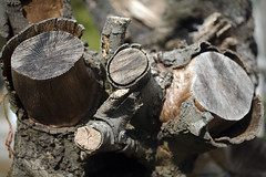 Stumps (C) 2007
