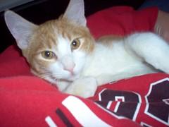 Tig (azmarine) Tags: animals 2006 kitties tigger