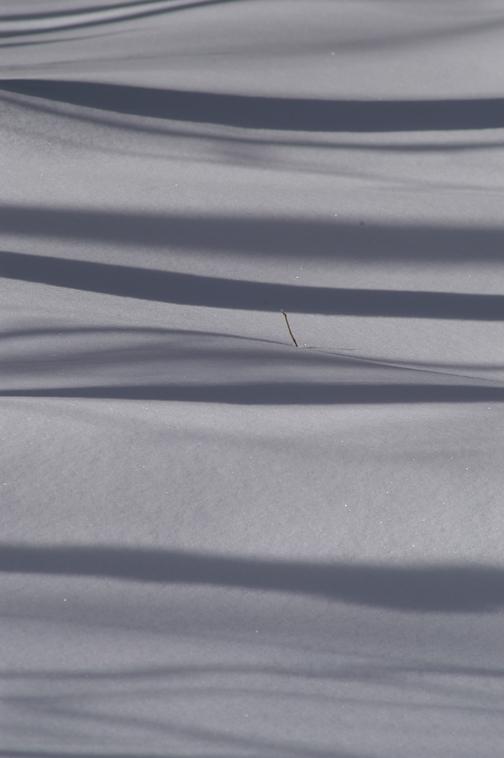 !SnowTwig