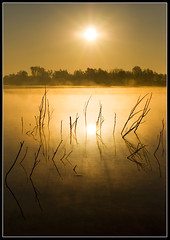 Golden Sunrise (Andrea Cucconi) Tags: sunset italy sun mist hot reflection water colors beautiful yellow fog sunrise gold mirror golden photo amazing nikon italia tramonto shot bright alba awesome horizon picture giallo fav 1025 fotografia sole nebbia colori rami italians specchio oro waterreflection riflesso orizzonte foschia peopleschoice naturesfinest thebigone dorato supershot campogalliano d80 nikonstunninggallery abigfave andreacucconi anawesomeshot impressedbeauty goldenphotographer diamondclassphotographer favemegroup8 ysplix superlativas