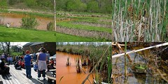 Wetlands, Mine Drainage, Frogs and Fun