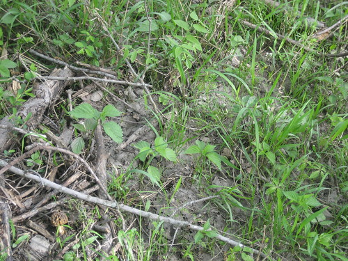 And near the morel...