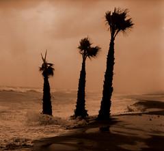 the storm (stusea) Tags: winter storm beach spain palm trree questfortherest stuseaphotos stuartcarroll mobformat09filmnoir