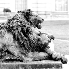 Wondering where the lions are.... (Debbie Sabadash) Tags: italy lions globalvillage itsabeautiful globalcity invitedphotosonly gvadminshalloffame padovavilla