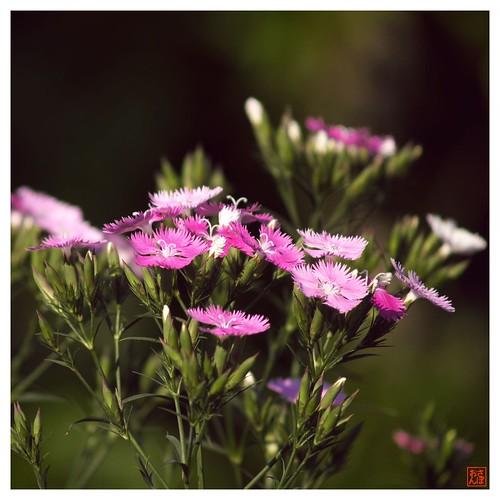 Today's Photo 070507 #02