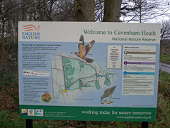 Cavenham Heath Suffolk (Bury Gardener) Tags: uk england suffolk eastanglia breckland cavenham cavenhamheath