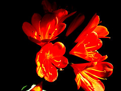 FLOWERS IN THE DARK (motene) Tags: flowers fiori
