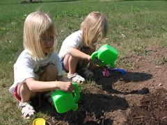Planting flower seeds...