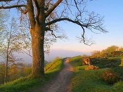 Hommikune jalutuskäik - Morning walk