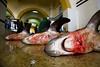 jaws 3 (lomokev) Tags: fish canon dead eos shark blood fishing floor ground morocco deaf 5d animales fishmarket essaouira pescados canoneos5d deletetag essaouirafishmarket file:name=img1043 rota:type=showall rota:type=composition rota:type=stilllife